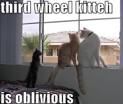 Cat - third wheel kitteh is oblivious