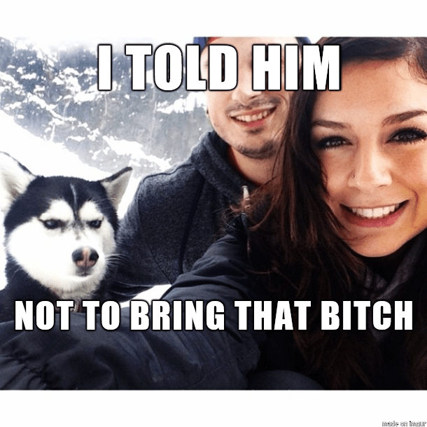 Siberian husky - LTOLD HIM NOT TO BRING THAT BITCH