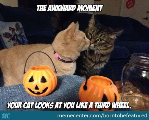 Cat - THE AWKWARD MOMENT YOUR CAT LOOKS AT YOU LIKE A THIRD WHEEL МC memecenter.com/borntobefeatured
