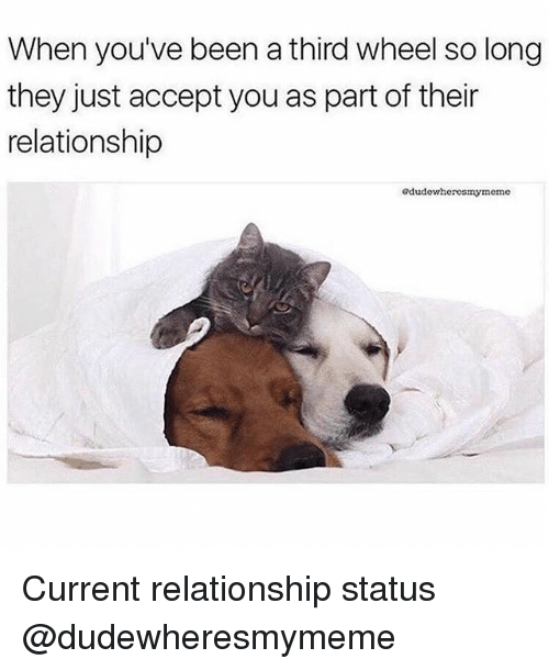 Nose - When you've been a third wheel so long they just accept you as part of their relationship edudewheresmymeme Current relationship status @dudewheresmymeme
