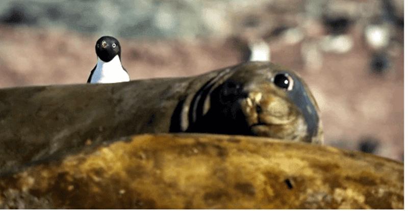 aww animal GIFs penguins cute animals animals - 9211653