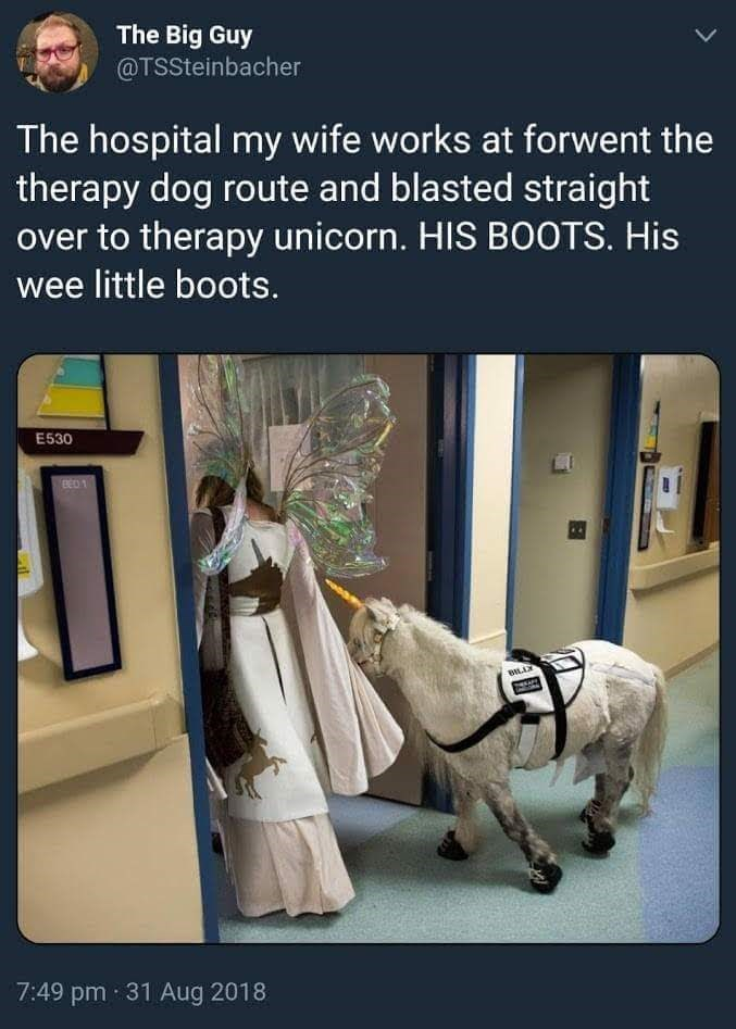 Product - The Big Guy @TSSteinbacher The hospital my wife works at forwent the therapy dog route and blasted straight over to therapy unicorn. HIS BOOTS. His wee little boots. E530 BED BLL 7:49 pm 31 Aug 2018