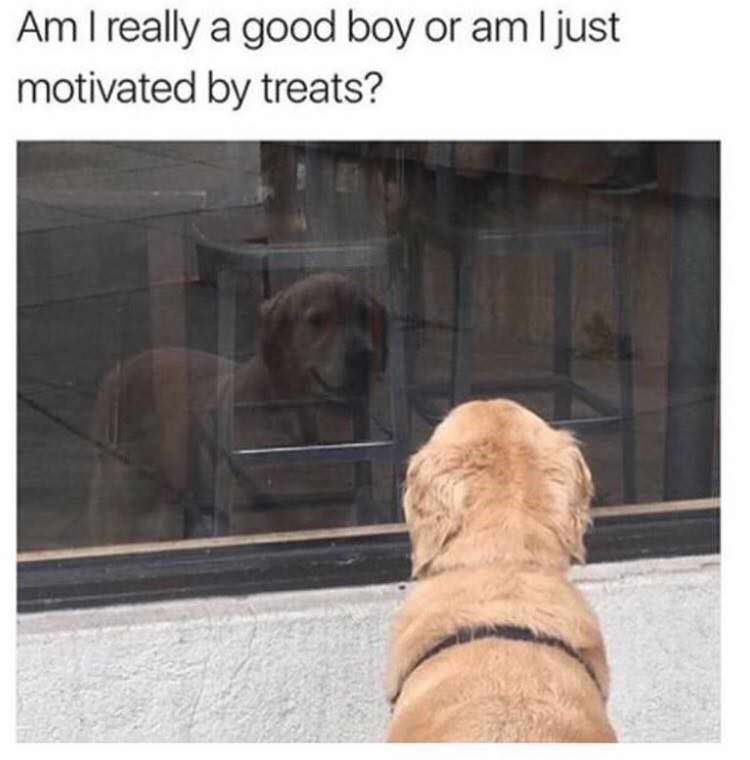 "Caption reads, ""Am I really a good boy or am I just motivated by treats?"" above a pic of a golden retriever looking at his reflection in a window"