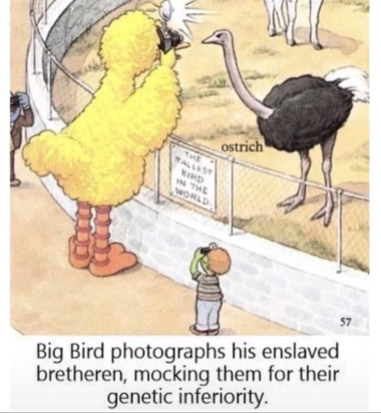 Cartoon - ostrich THE TALLEST IRD IN THE WORLD 57 bretheren, mocking them for their genetic inferiority. Big Bird photographs his enslaved
