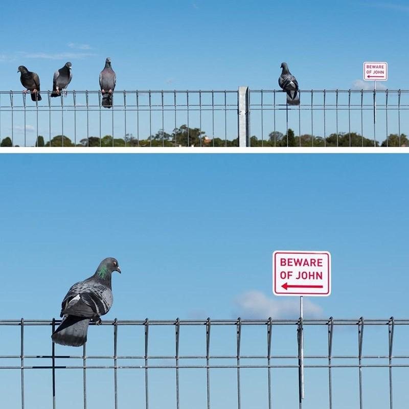 Bird - BEWARE OF JOHN BEWARE OF JOHN