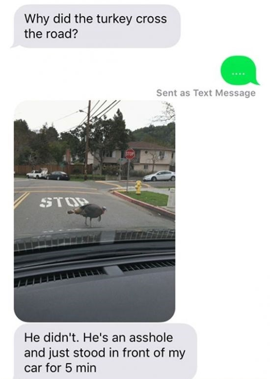 Product - Why did the turkey cross the road? Sent as Text Message STOP He didn't. He's an asshole and just stood in front of my car for 5 min