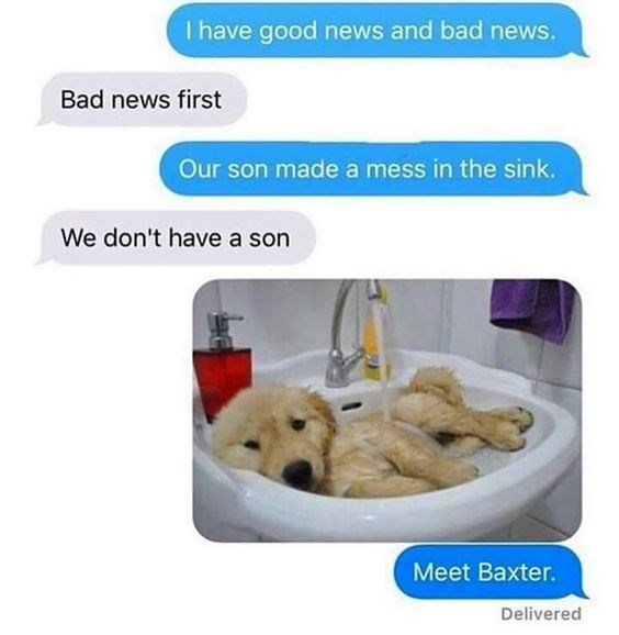 Golden retriever - I have good news and bad news. Bad news first Our son made a mess in the sink. We don't have a son Meet Baxter. Delivered