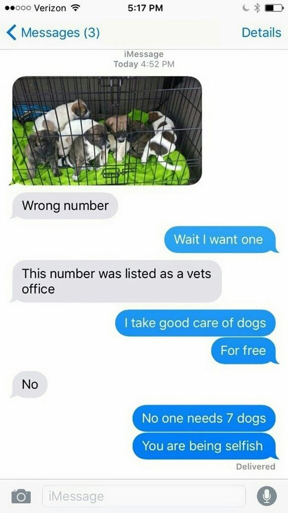 Font - ooo Verizon 5:17 PM Details Messages (3) iMessage Today 4:52 PM Wrong number Wait I want one This number was listed as a vets office I take good care of dogs For free No No one needs 7 dogs You are being selfish Delivered iMessage о