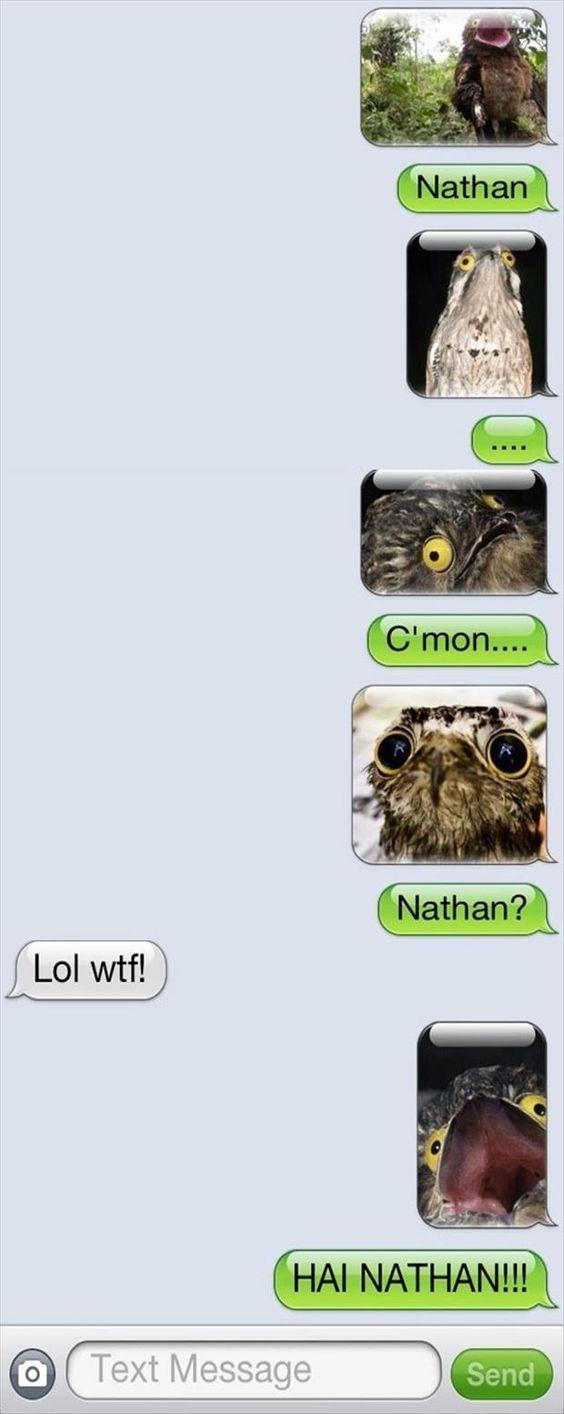 Owl - Nathan C'mon.... Nathan? Lol wtf! HAI NATHAN!! Text Message Send