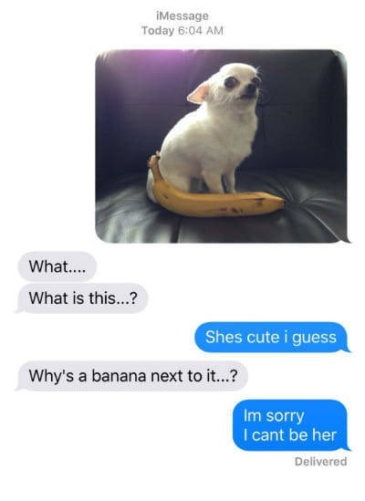 Canidae - iMessage Today 6:04 AM What.... What is this...? Shes cute i guess Why's a banana next to it...? Im sorry I cant be her Delivered
