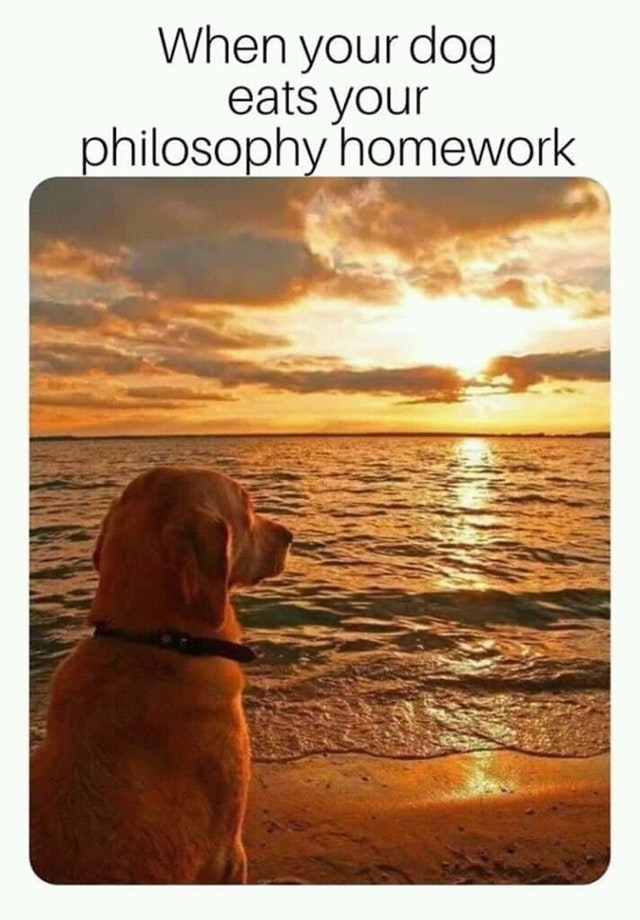 Funny meme about dog eating philosophy homework.