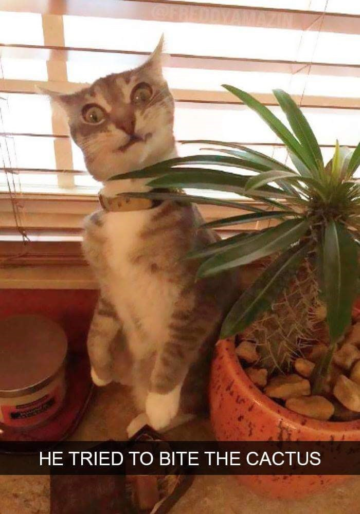 cute animal - Cat - HE TRIED TO BITE THE CACTUS