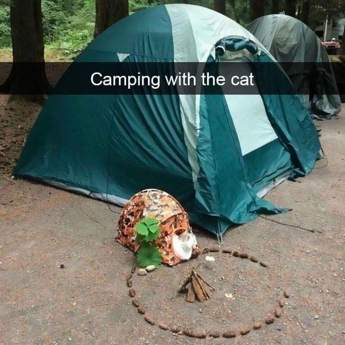 """Snapchat caption that read, """"Camping with the cat"""" over a pic of a tent next to a tiny tent for the cat"""