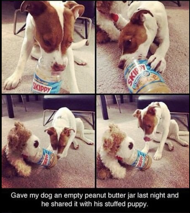 cute animal - Dog - SKIPPY Gave my dog an empty peanut butter jar last night and he shared it with his stuffed puppy.