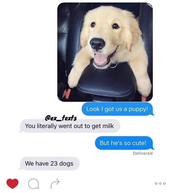 cute animal - Dog - Look I got us a puppy! @ex texts You literally went out to get milk But he's so cute! Delivered We have 23 dogs O O O