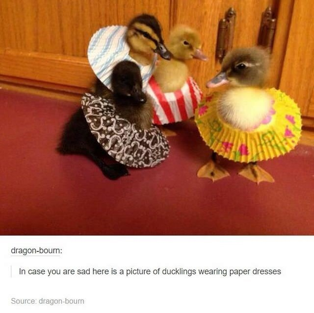 cute animal - Duck - dragon-bourn: In case you are sad here is a picture of ducklings wearing paper dresses Source: dragon-bourn