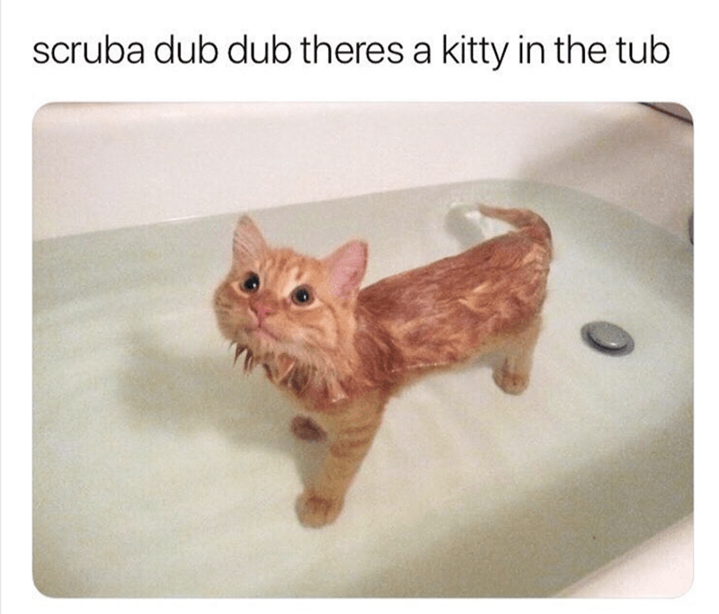 cute animal - Cat - scruba dub dub theres a kitty in the tub