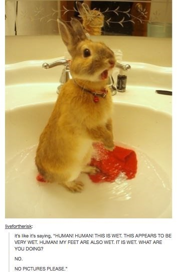 """cute animal - Rabbit - livefortherisk: it's like it's saying, """"HUMAN! HUMAN! THIS IS WET. THIS APPEARS TO BE VERY WET. HUMAN! MY FEET ARE ALSO WET. IT IS WET. WHAT ARE YOU DOING? NO. NO PICTURES PLEASE,."""""""