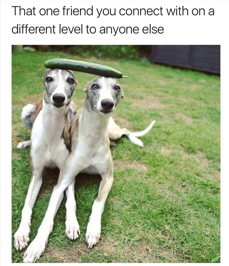 cute animal - Dog - That one friend you connect with on a different level to anyone else