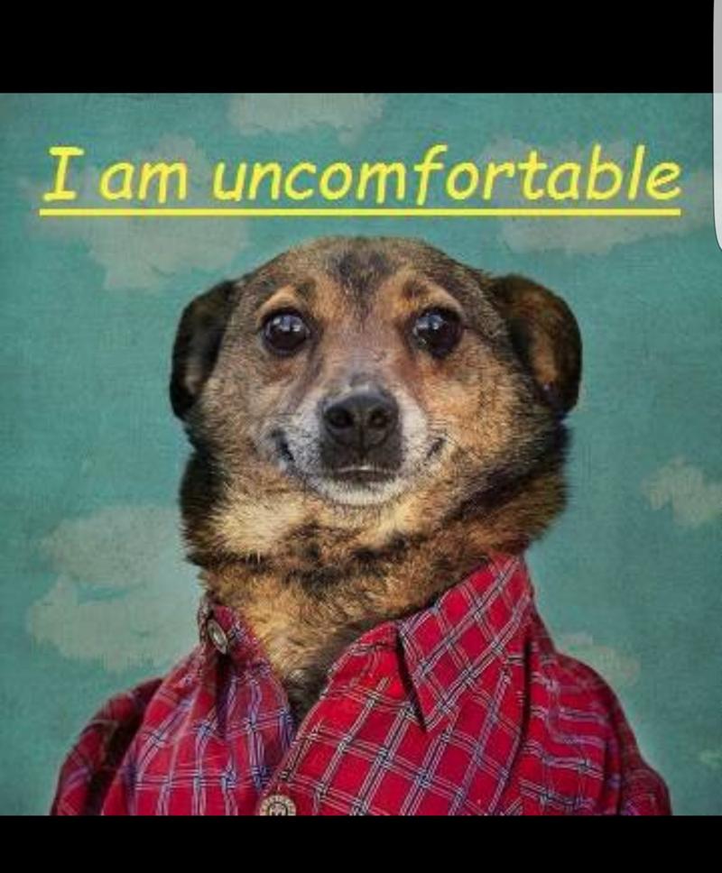 dank meme - Dog - I am uncomfortable