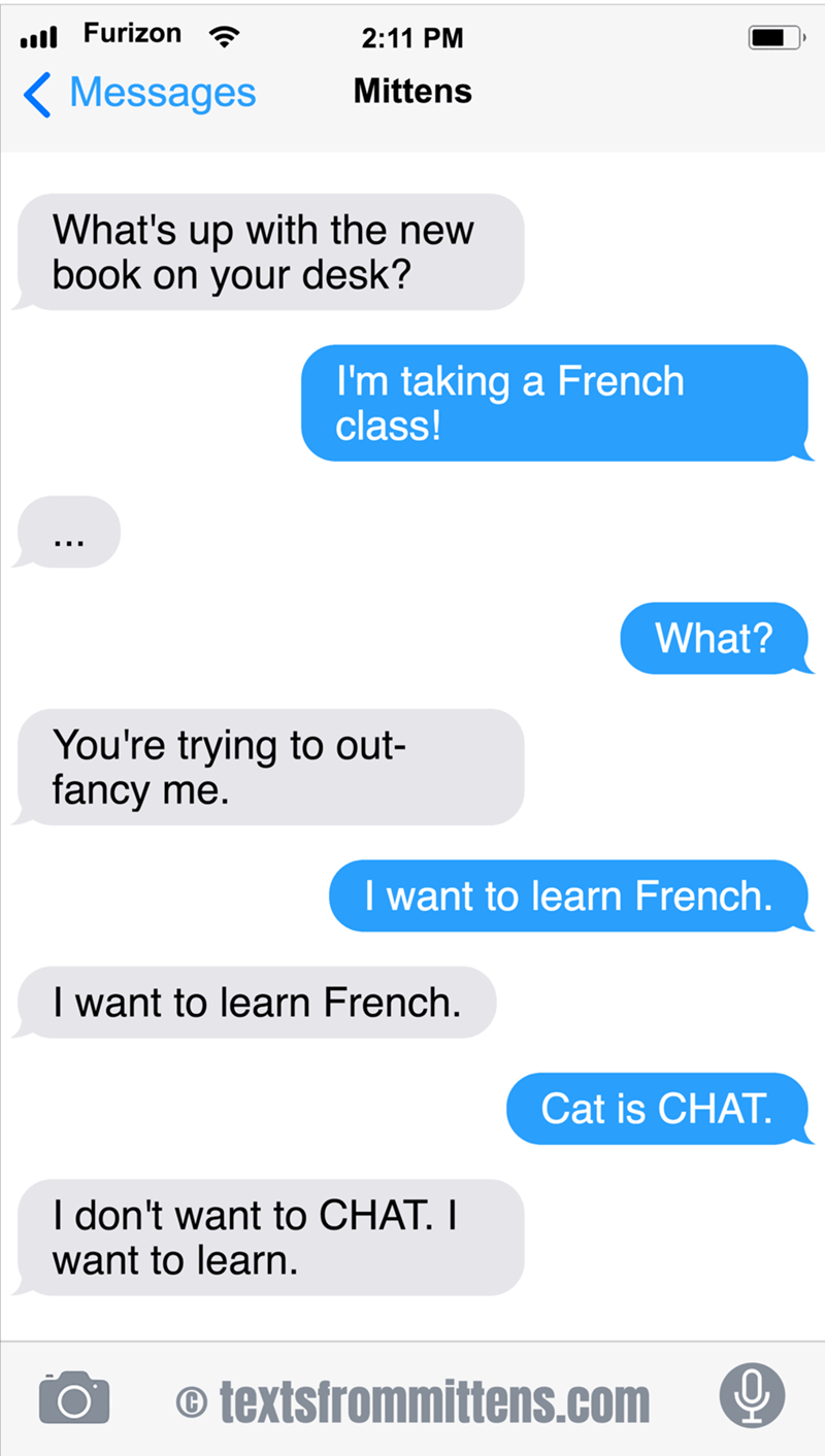 cute cat wants to learn french