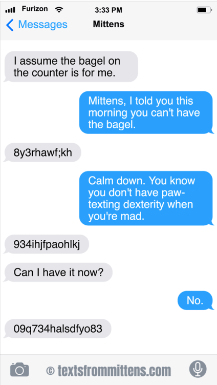 cute cat mittens upset about not being allowed to eat the bagel on the counter
