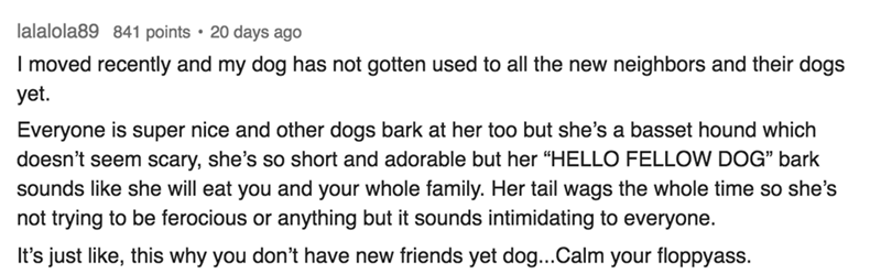 """Text I moved recently and my dog has not gotten used to all the new neighbors and their dogs yet Everyone is super nice and other dogs bark at her too but she's a basset hound which doesn't seem scary, she's so short and adorable but her """"HELLO FELLOW DOG"""" bark sounds like she will eat you and your whole family. Her tail wags the whole time so she's not trying to be ferocious or anything but it sounds intimidating to everyone. It's just like, this why you don'"""