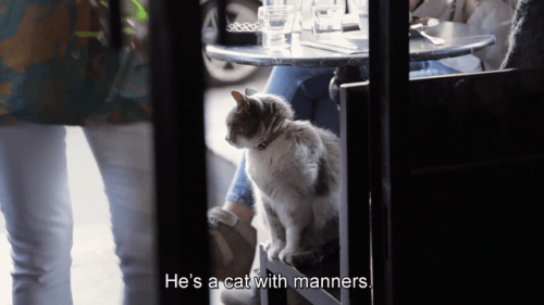 Cat - He's a cat with manners.