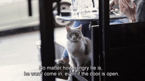Cat - No matter how.hungry he is, he won't come in, even if the door is open.