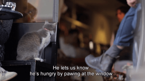 Cat - He lets us know he's hungry by pawing at the window