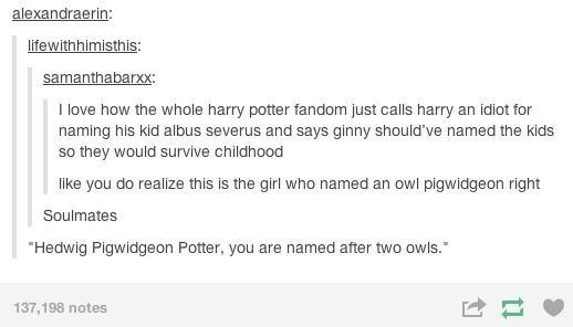 "memes - Text - alexandraerin: lifewithhimisthis samanthabarxx: I love how the whole harry potter fandom just calls harry an idiot for naming his kid albus severus and says ginny should've named the kids so they would survive childhood S like you do realize this is the girl who named an owl pigwidgeon right Soulmates ""Hedwig Pigwidgeon Potter, you are named after two owls. 137,198 notes tl"