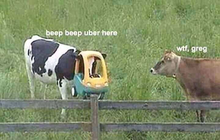 work meme - Mammal - beep beep uber here wf, greg