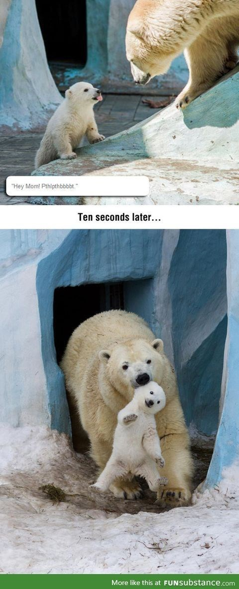 "bear meme - Polar bear - ""Hey Mom! Pthlpthbbbbt."" Ten seconds later... More like this at FUNSubstance.com"