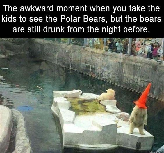 bear meme - Water - The awkward moment when you take the kids to see the Polar Bears, but the bears still drunk from the night before.