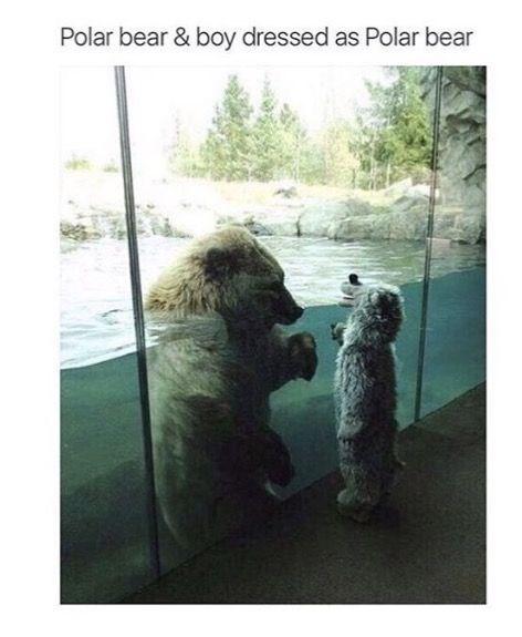 bear meme - Dog - Polar bear & boy dressed as Polar bear