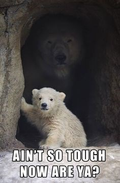 bear memes - baby bear and momma bear in a cave - AIN'T SO TOUGH NOW ARE YA?