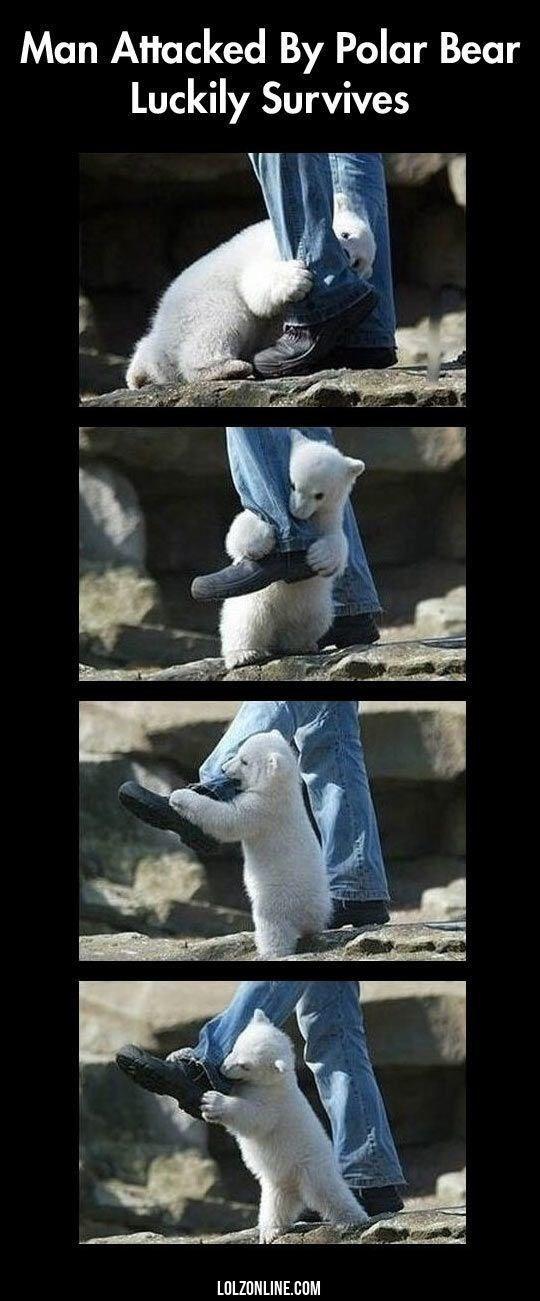 bear meme - Sculpture - Man Attacked By Polar Bear Luckily Survives LOLZONLINE.COM