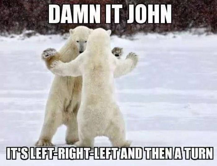 bear meme - Polar bear - DAMN IT JOHN IT'S LEFT-RIGHT LEFT AND THENA TURN