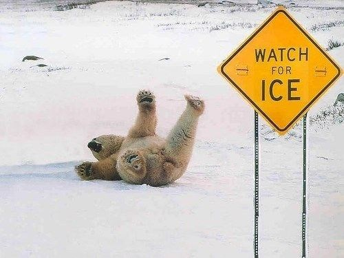bear meme - Sign - WATCH FOR ICE