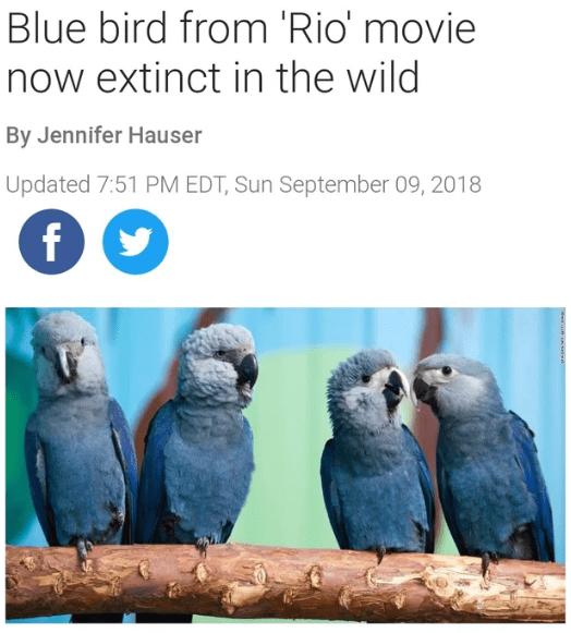 "headline about the bird species from the movie ""Rio"" going extinct"
