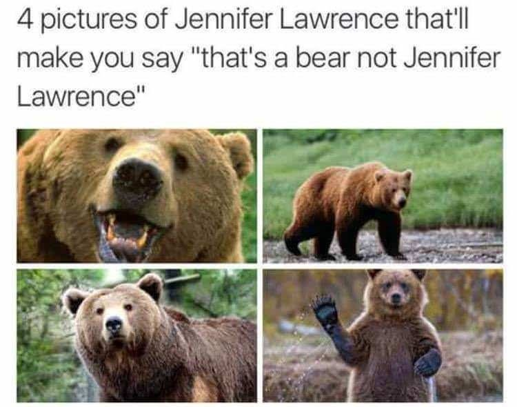 "Caption that reads, ""Four pictures of Jennifer Lawrence that'll make you say 'that's a bear, not Jennifer Lawrence"" above four pics of bears"