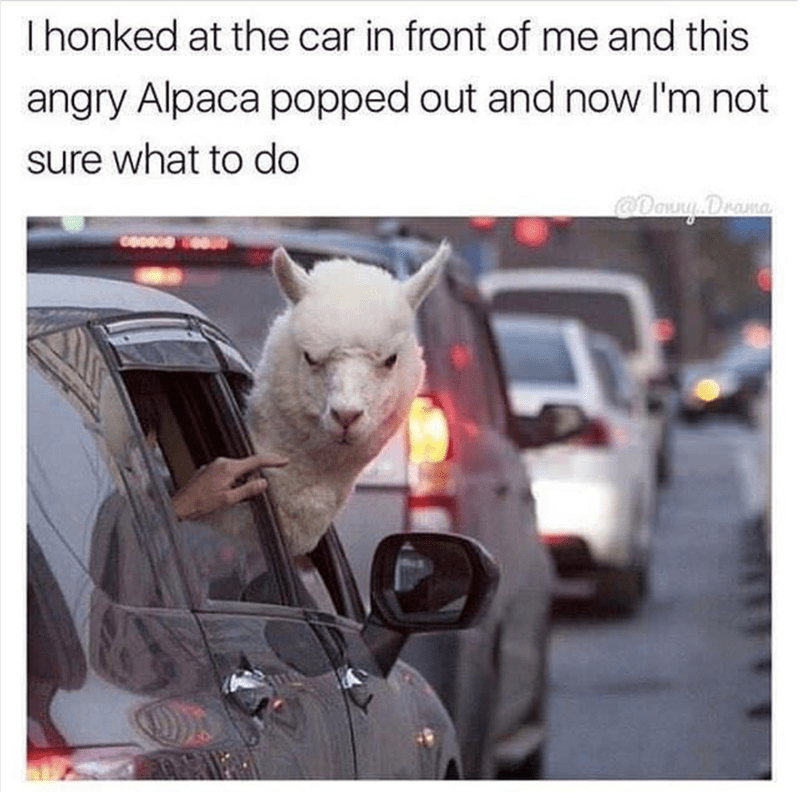 Alpaca frowning meme in rush hour traffic driving