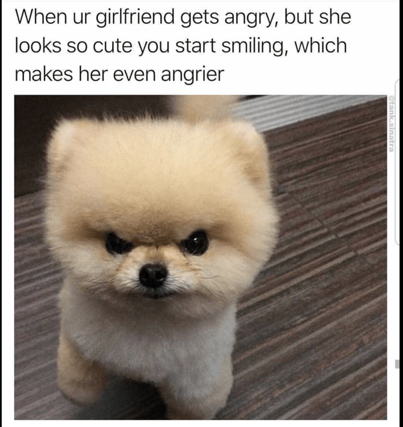 angry but cute dog meme about your gf