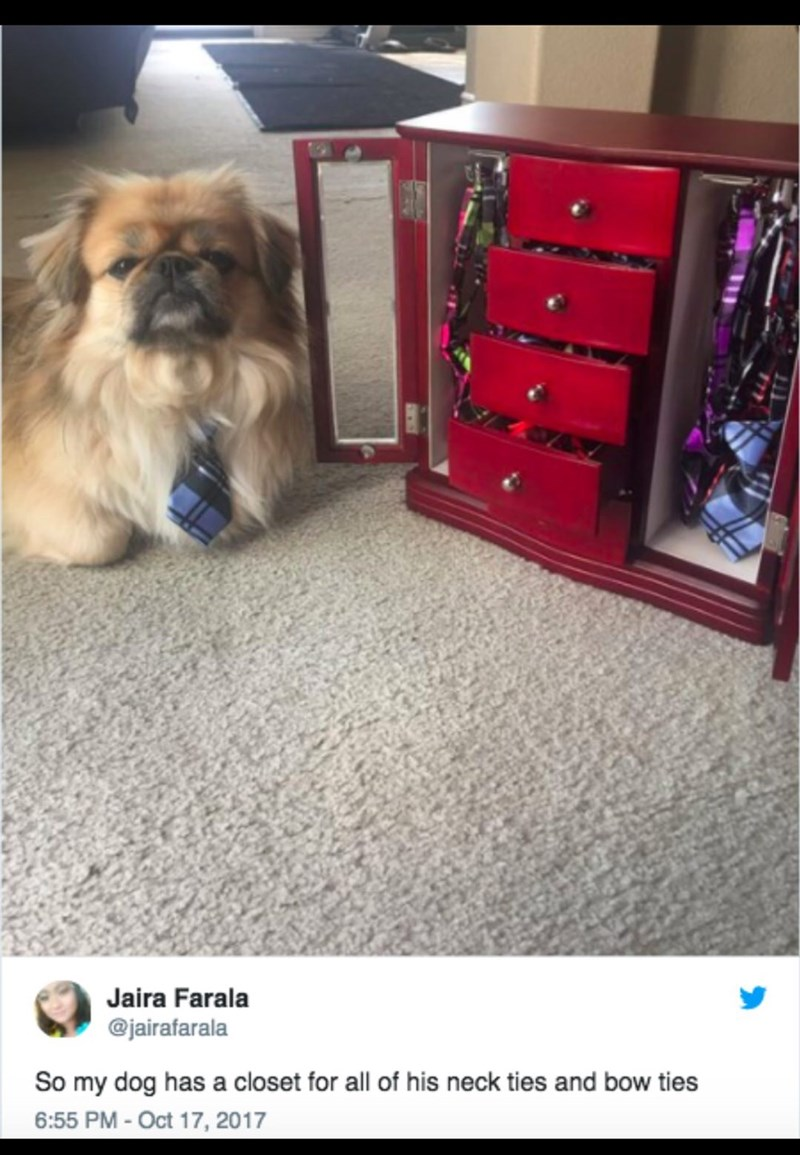 dog with closet for his ties on Twitter