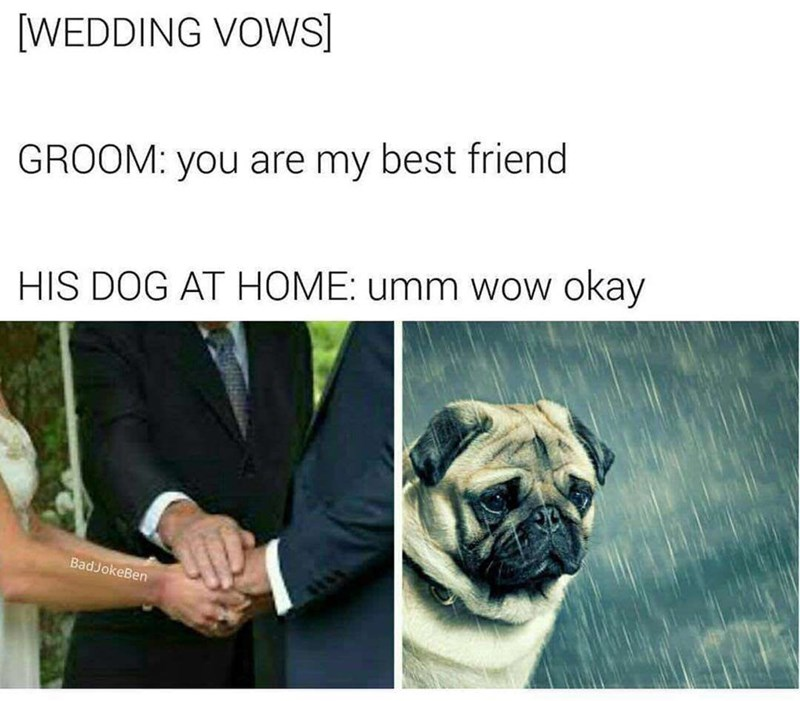 sad dog about being best friend meme