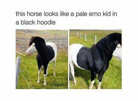 dog that looks like an emo kid with a hoodie