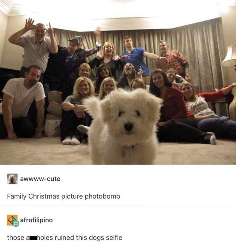 cute dog photobomb