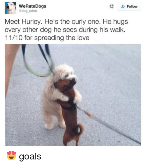dogs hugging meme