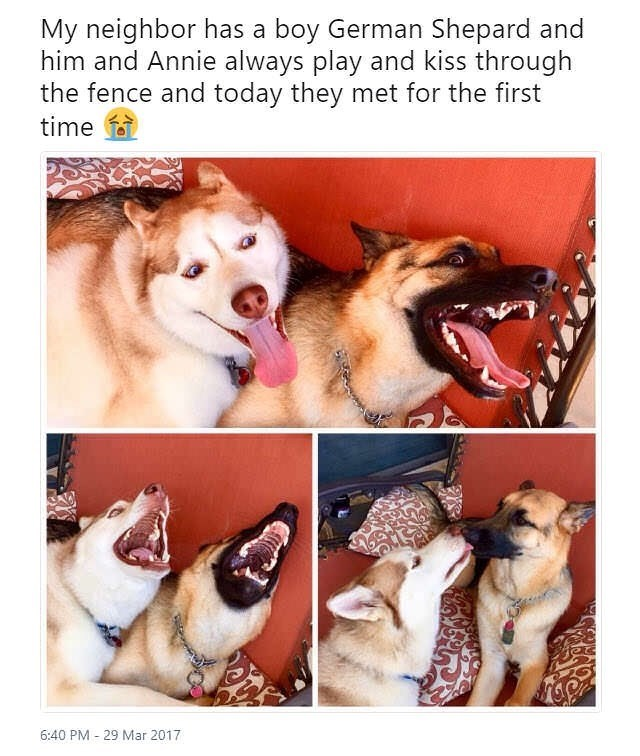 cute dogs meme
