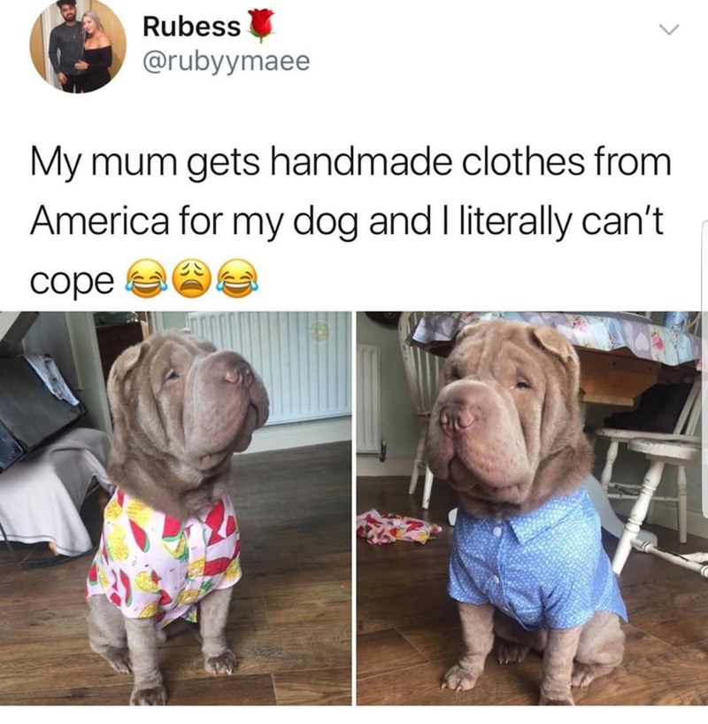 dog with handmade clothes